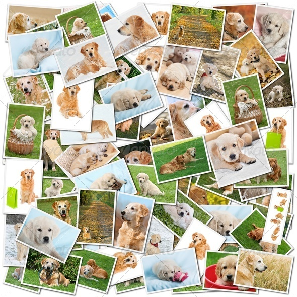 Dog collage - Stock Photo - Images