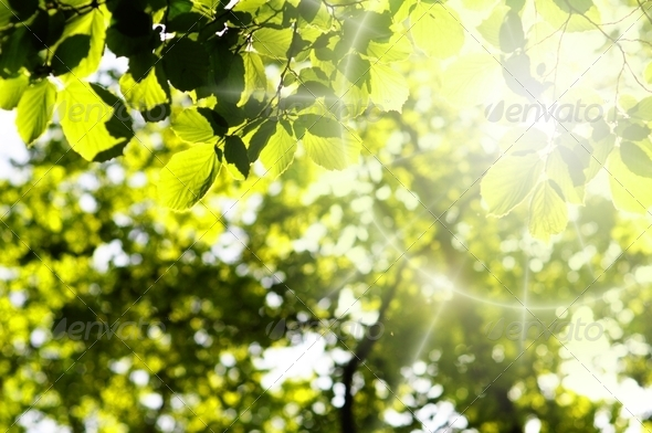 leaves and copyspace - Stock Photo - Images