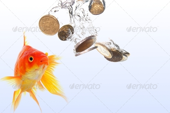 goldfish and money - Stock Photo - Images