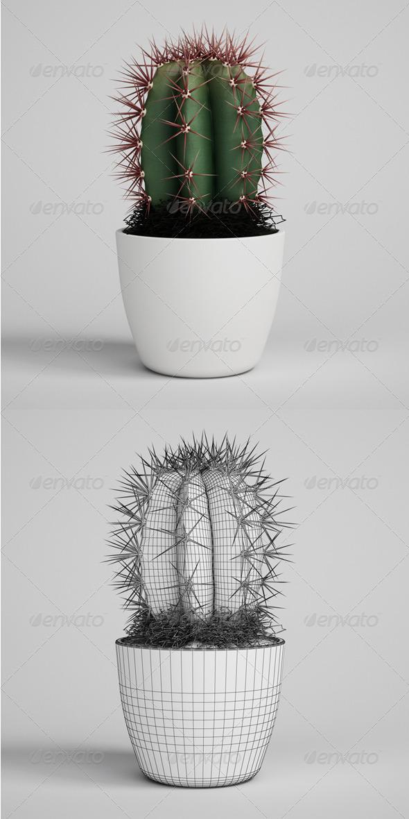 3DOcean CGAxis Cactus Plant in Pot 05 164987