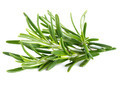Rosemary on a white background  - PhotoDune Item for Sale