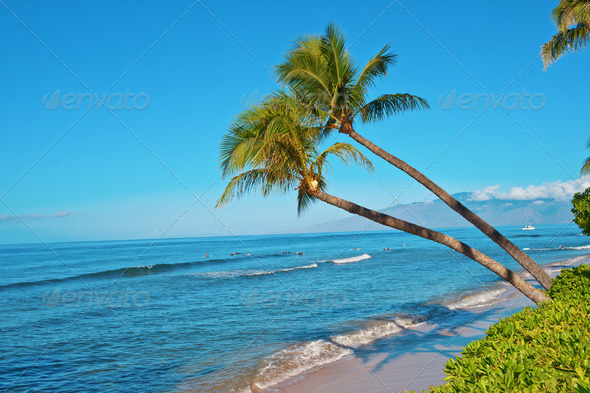 Palm trees and the ocean beach - Stock Photo - Images