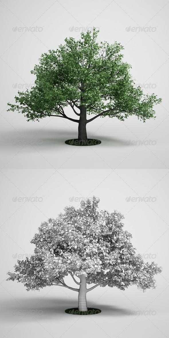 3DOcean CGAxis Oak Tree 15 168131