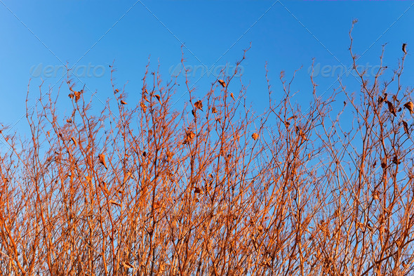 Dried grassy plants - Stock Photo - Images