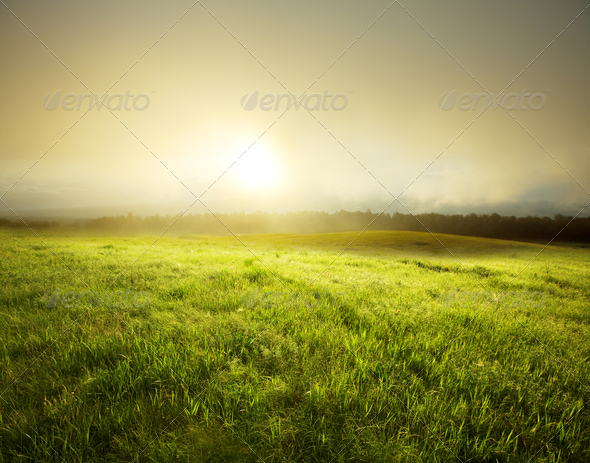 Fog in meadow - Stock Photo - Images