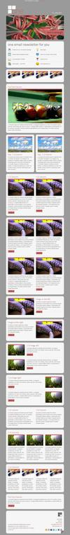 12_one-email-newsletter-with-template-builder-v11.__thumbnail