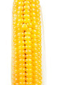 Corn on the Cob on White Background - PhotoDune Item for Sale
