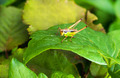 colorful bush cricket - PhotoDune Item for Sale