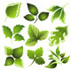 Spring leaves - GraphicRiver Item for Sale