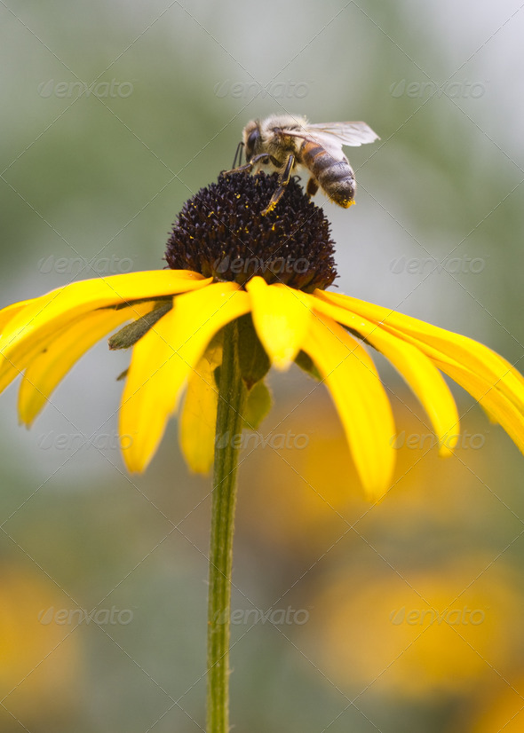 Bee on a Flower - Stock Photo - Images