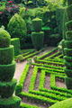 Topiary - buxus  - PhotoDune Item for Sale