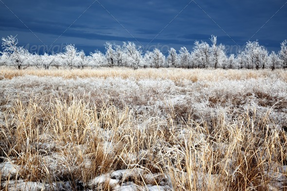 Meadow and trees after the first snowfall - Stock Photo - Images