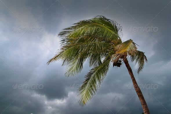 PhotoDune hurricane tropical storm 1521602