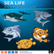 Sea life pack - GraphicRiver Item for Sale