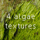 Algae on a rock texture pack - GraphicRiver Item for Sale
