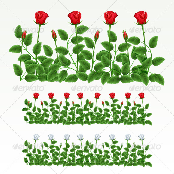Border of roses GraphicRiver - Vectors -  Conceptual  Nature  Flowers & Plants 180108