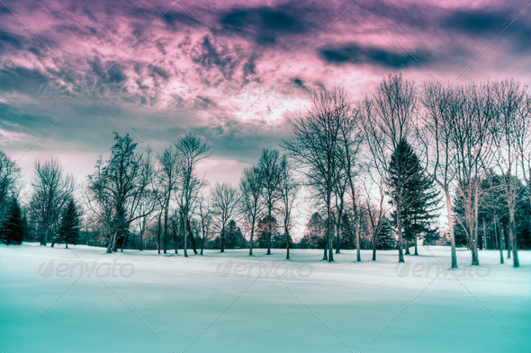 Winter Scene HDR - Stock Photo - Images