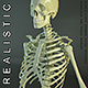 HD Skeleton of a Human - 3DOcean Item for Sale