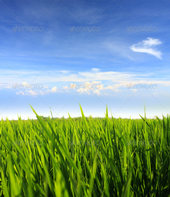 green grass and blue sky - Stock Photo - Images