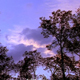 Time lapse of Clouds Over Forest 4 - VideoHive Item for Sale