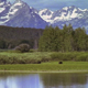Moose Grazing Next to Oxbow Lake - VideoHive Item for Sale