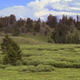 Pan L-R Forest Meadow - VideoHive Item for Sale