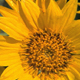 Close up of Yellow Flowers - VideoHive Item for Sale