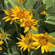 Close up of Yellow Flower Patch - VideoHive Item for Sale