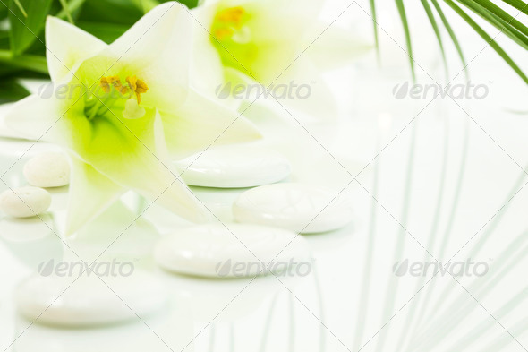 pebbles and flowers (SPA concept) - Stock Photo - Images