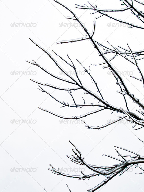 background - tree limb with ice - Stock Photo - Images