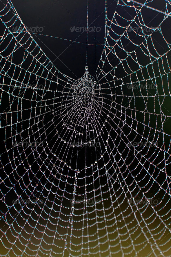 Dewy Spiders Web - Stock Photo - Images