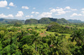 Tobacco plantation in Vinales valley, Cuba - PhotoDune Item for Sale