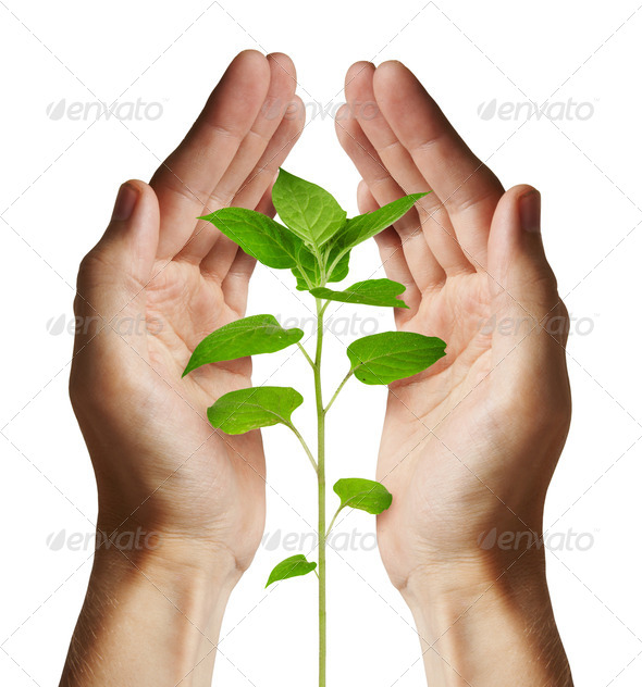 Growing green plant - Stock Photo - Images