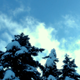 Snowy Firs and Clouds - VideoHive Item for Sale