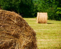 Round straw bales - PhotoDune Item for Sale