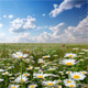 Summer Landscape - VideoHive Item for Sale