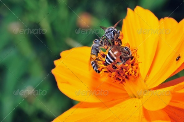 Closeup many bee on the yellow flower. - Stock Photo - Images