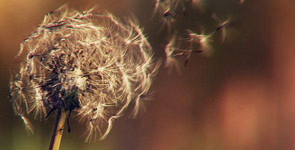 VideoHive Dandelion in the Wind 1632730