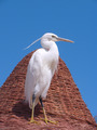 Egret on a beach umbrella - PhotoDune Item for Sale