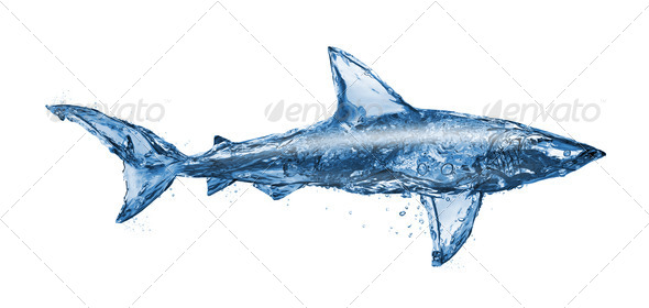 Water shark - Stock Photo - Images