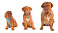 Group of the dogs of different size wearing different dog's accessories - PhotoDune Item for Sale