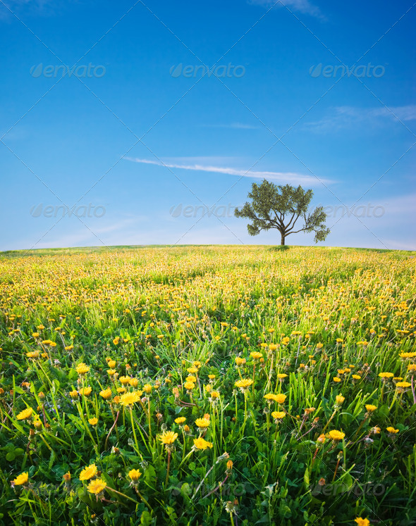 Green field - Stock Photo - Images