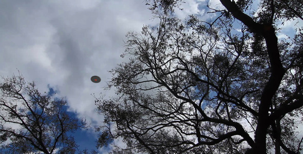 VideoHive UFO Flying Over Trees 1672967