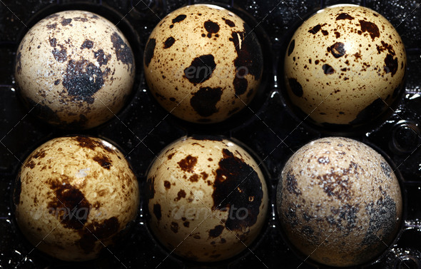 Bird Eggs 16 - Stock Photo - Images