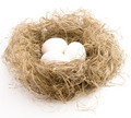 Eggs of white colour in a nest - PhotoDune Item for Sale