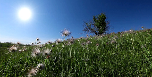 Summer Landscape VideoHive Stock Footage  Nature 1716614