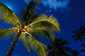Tropical Night Sky, Palm Trees and Moon - PhotoDune Item for Sale