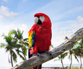 Parrot - PhotoDune Item for Sale