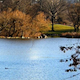 Landscape HD/Lake in the park 2 - VideoHive Item for Sale