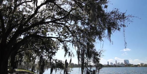 Oak Tree On Lake With City Skyline 2 VideoHive Stock Footage  City 1735865 torrent